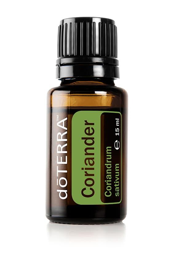Koriander Coriandrum sativum - Coriander