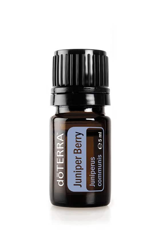 Wacholderbeere – Juniperus communis – Juniper Berry